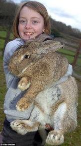 前 世界最大兔子 之子有望继承母亲头衔
