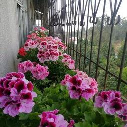 各种家养花的样子和功能