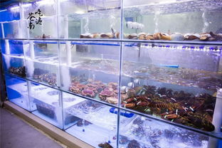海鲜送人,选择买什么海鲜比较好?