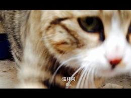 猫补(猫咪肚子大且食量大增)