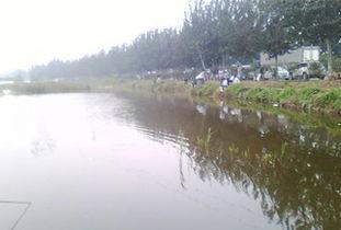 独流碱河哪个位置可以钓鱼
