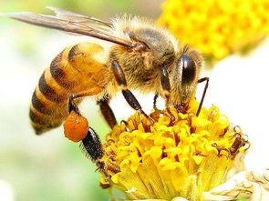有关蜜蜂的蜂巢的诗句