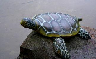 为什么要用龟壳作为占卜工具,而不是用其他的物质(怎样用龟壳占卜)