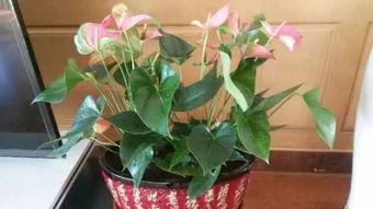 养花浇水坐盆法