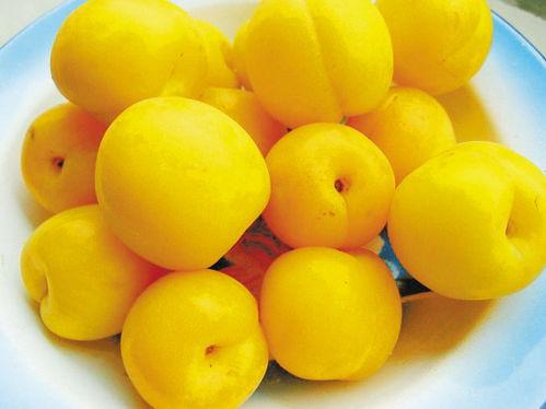 杏会是什么东西
