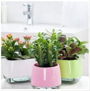 室内墙上水养花草