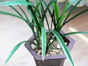 养花的又肥又松的土是怎么制作的
