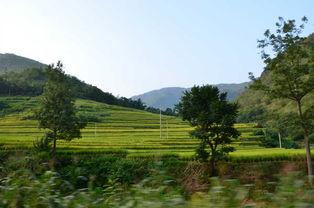 云南大理丽江香格里拉梅里雪山游图片