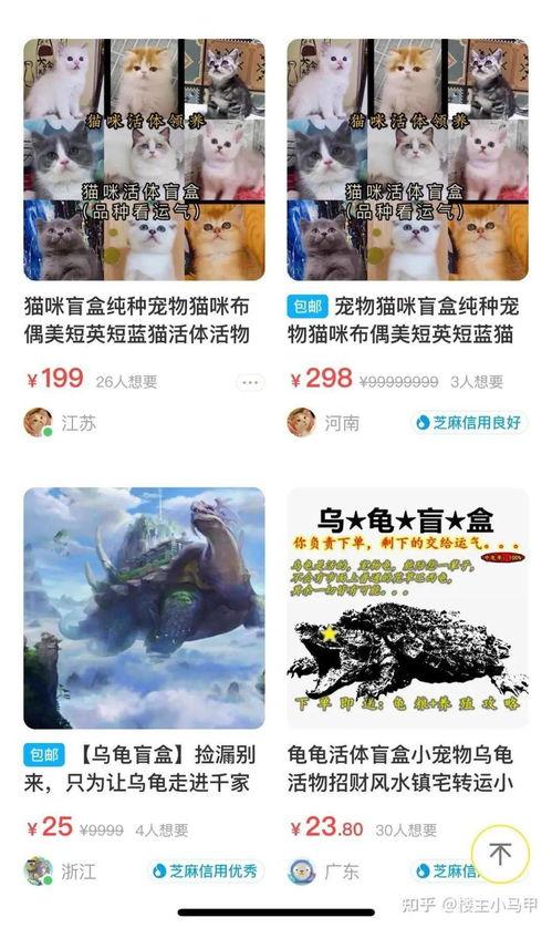 35元70g虐猫视频遏制虐猫狗黑色产业链,人大代表再提反虐待动物立法