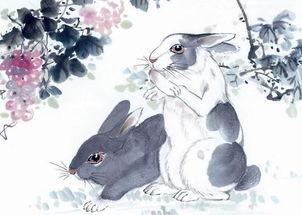 87年属兔适合养花