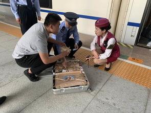 急价值二百万物品遗忘动车上暖民警和车站联动找回行李箱