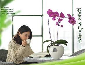 吸水花盆养花好吗