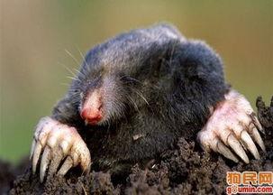 盘点 地球上最可爱的十种动物