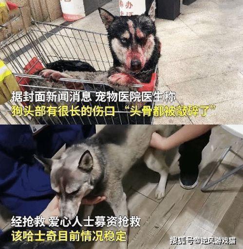 四川一男子虐狗后将其扔进电梯,物业发现后报警头骨都被敲碎了