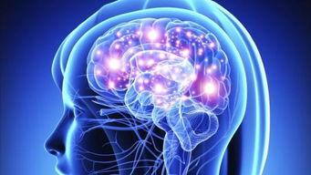 全球十大神经科学大学