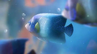 什么失什么鱼谚语
