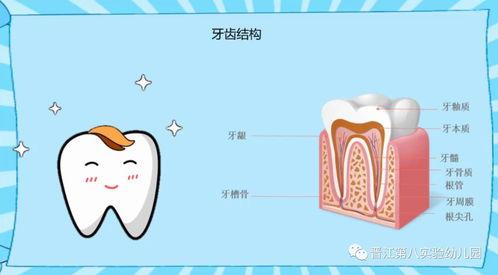 爱牙护牙的小知识(爱牙护牙的知识)