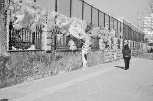 学校围墙上挂满白色烂塑料布
