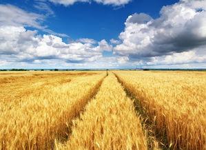 联合国粮农组织:粮食供应问题预计4月至5月出现