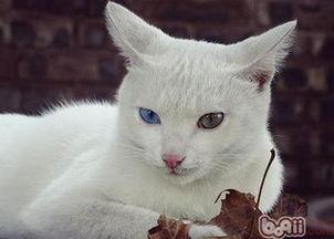 怎么出售自己的猫咪
