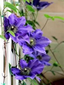 阳台养花有飞蛾