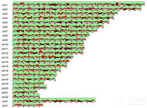 线性基因组可视化神来之笔 karyoploteR