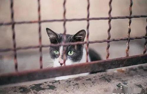 人大代表建议制定反动物虐待法,虐猫离暴力犯罪还有多远