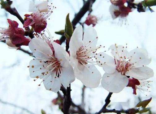 关于桃杏李的诗句