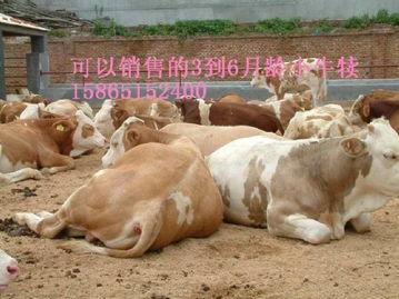 山东郓城齐天牛羊驴繁殖调拨基地