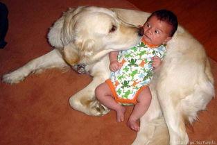 动物也有爱 也有心理和感情