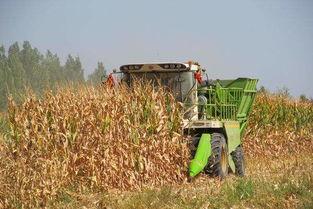 玉米机械化收获自查报告