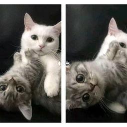 是猫咪的情头