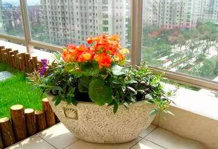 通风对家庭养花的重要性