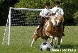 世界杯为什么会用一只动物来预测(什么动物成功预测世界杯揭幕战赛