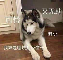 狗狗认错的表现(狗会认错人么?)