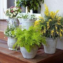 室内植物摆放风水有什么禁忌吗(室内花草摆放有哪些风水禁忌)