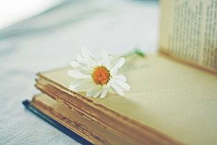 表达你很重要的古诗词