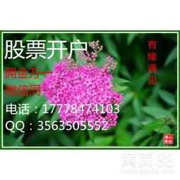 上海股票期权开户条件(期权如何开户)_1762人推荐