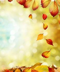 关于诗人对于秋天落叶悲切的诗句
