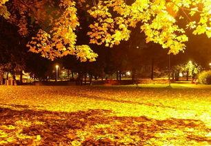 描写秋天的句子含书名