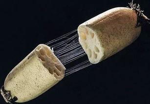 藕断丝连的丝是什么组织,藕断丝连歌曲原唱第1张-我爱代挂网