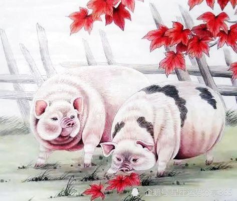 1971年属猪五行什么命(71年生的女,今年的婚姻和财运)