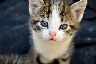 有耳螨的猫咪必须隔离吗