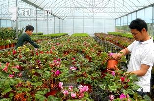 养花赚流量